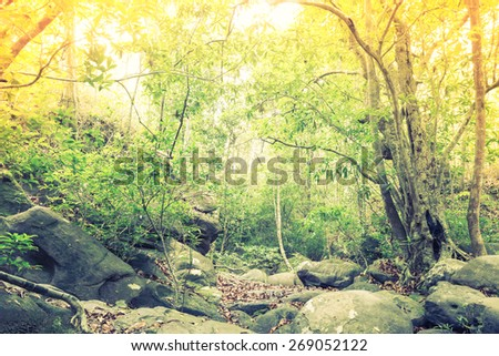 Forest trees  ( Filtered image processed vintage effect. ) - stock photo