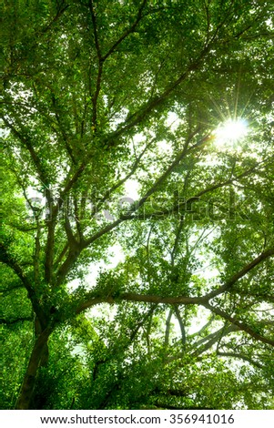 Forest trees, green leaves and sunlight background