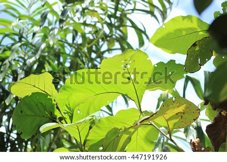 forest trees leaf. natural green background with selective focus.soft focus the field for background. - stock photo