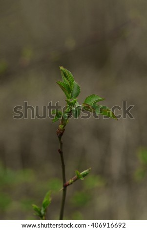 forest trees leaf. nature green wood sunlight backgrounds. Blurred - stock photo