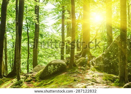 Forest trees. nature green wood sunlight backgrounds - stock photo
