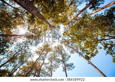 forest trees. nature green wood, sunlight backgrounds - stock photo