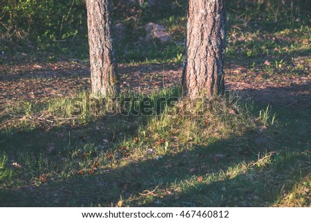forest trees. nature green wood sunlight backgrounds. - vintage effect