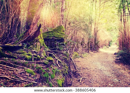 forest trees. nature wood - stock photo
