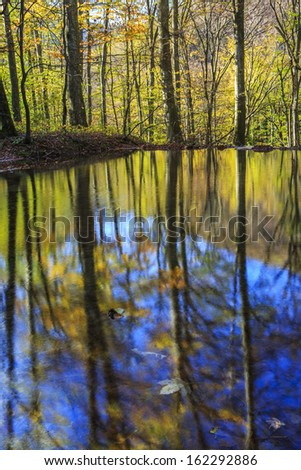 Forest trees reflection in a natural pond on a sunny day in autumn