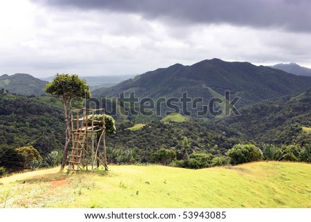 forest,tropical,mountain,ladder,lookout tower - stock photo