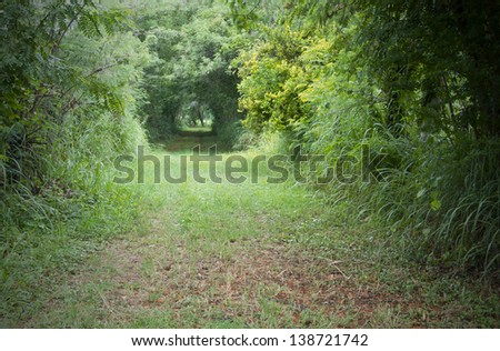forest tunnel - stock photo