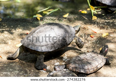 forest turtle in its natural environment close up - stock photo