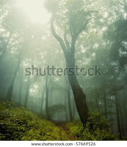 forest vegetation around a huge old tree - stock photo