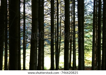 stock-photo-forest-view-trough-trunks-lo