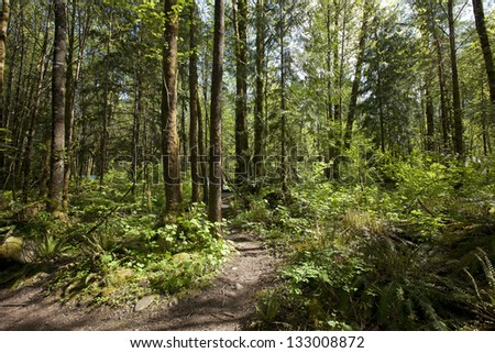 Forest -  virgin primeval rain forest with a path in spring - stock photo