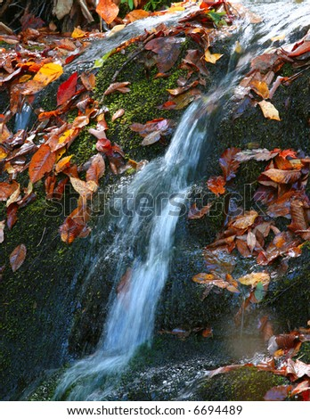 Forest Waterfall with moss and fallen leaves