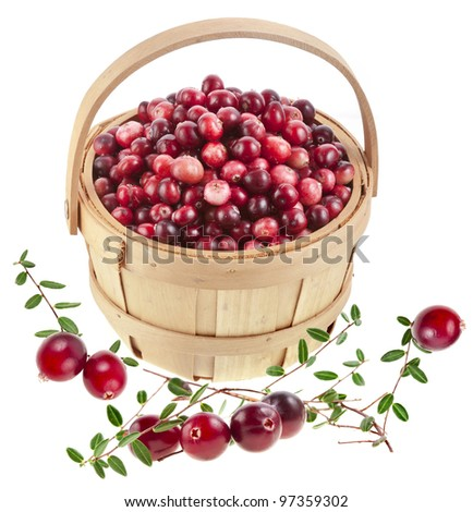 forest wild cranberries in the basket isolated on white background - stock photo