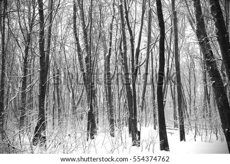 Forest winter black and white photo