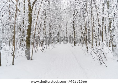 Forest winter forest with trees and bushes with snow-covered roads