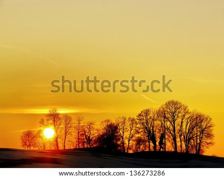 Forest with a sunrise in the background - stock photo
