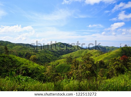 forest  with blue sky - stock photo