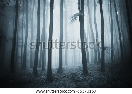 forest with elegant trees and fog - stock photo