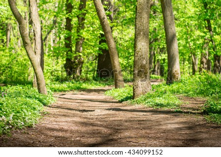 Forest with green lawn and tall trees