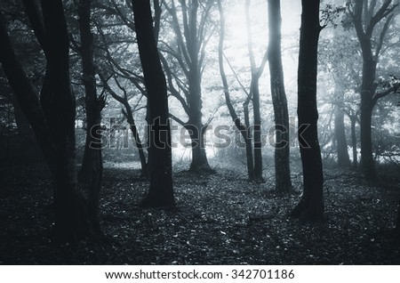 forest with old trees - stock photo