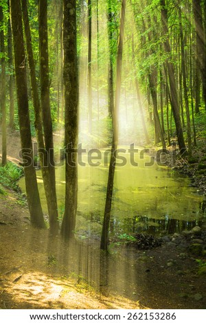 Forest with pond - stock photo
