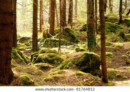 forest with ray of light - stock photo