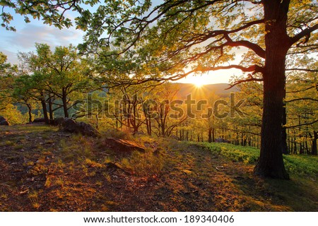 Forest with sun - stock photo