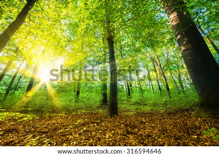 Forest with sun-rays