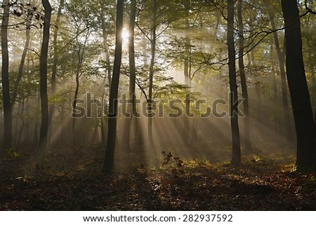 Forest with sun rays filtering through - stock photo