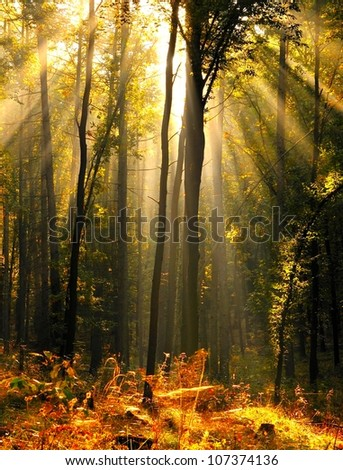 forest with the last of the sun shining through the trees. Poland
