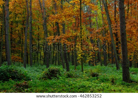 Forest with trees having yellow and orange autumn leaves