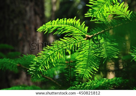 Forest wood ecology system tree nature - stock photo