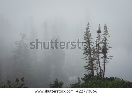 Forested mountain slope in low lying cloud with the evergreen conifers shrouded in mist in a scenic landscape view. Nature Park Ergaki, Siberia, Russia - stock photo