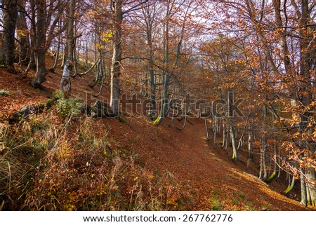 Forester trail in the wild Carpathian Mountains locality