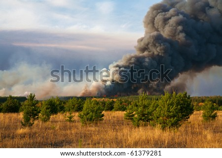 forestfire - stock photo