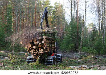 Forestry forwarder stacks up wood on the bunk of the vehicle in forest.