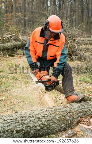 Forestry worker with chainsaw is sawing a log. Sample of works on forest logging - stock photo