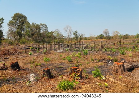 Forests are being exploited. - stock photo