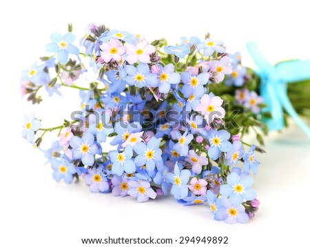 Forget-me-nots flowers, isolated on white