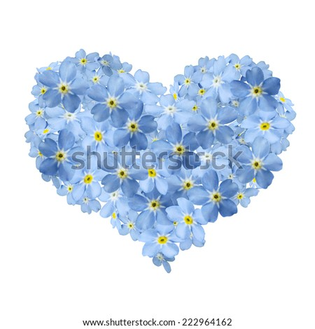 forgetmenot heart and white background - stock photo