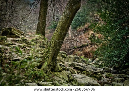 Forrest at Wicklow Waterfall in Ireland - stock photo