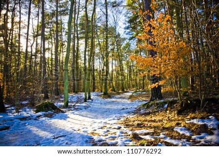 Forrest covered with leaves and path of snow. - stock photo