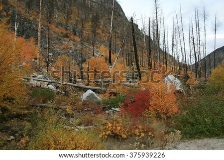 Forrest fire area - stock photo