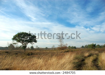 Forrest path with blue sky on autumn, fall day in belgium. - stock photo