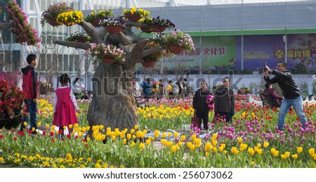 FOSHAN Feb 8:Chencun town, the Spring Festival is coming, at corner, display the tens of thousands of flowers, flowers, attracted many people to visit and take photos Feb 8, 2015 in Foshan, China - stock photo