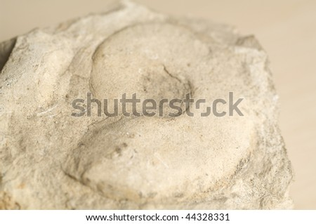 Fossil - stock photo