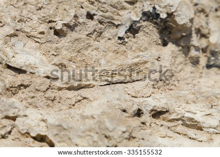 Fossil corals and shells of the Red Sea. - stock photo