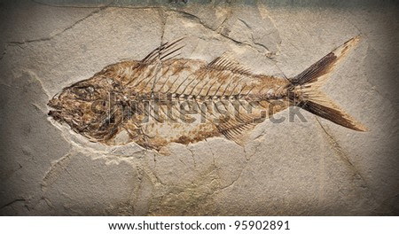 Fossil of a prehistoric fish. - stock photo
