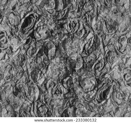 fossil shells - stock photo