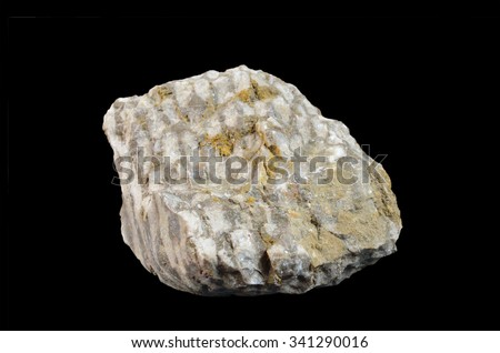 fossilized coral colony.  Family: Favositidae - stock photo